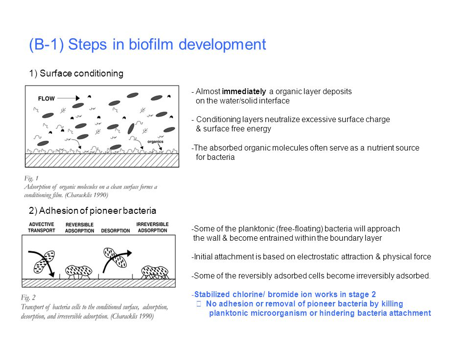 (B-1) Steps in biofilm development