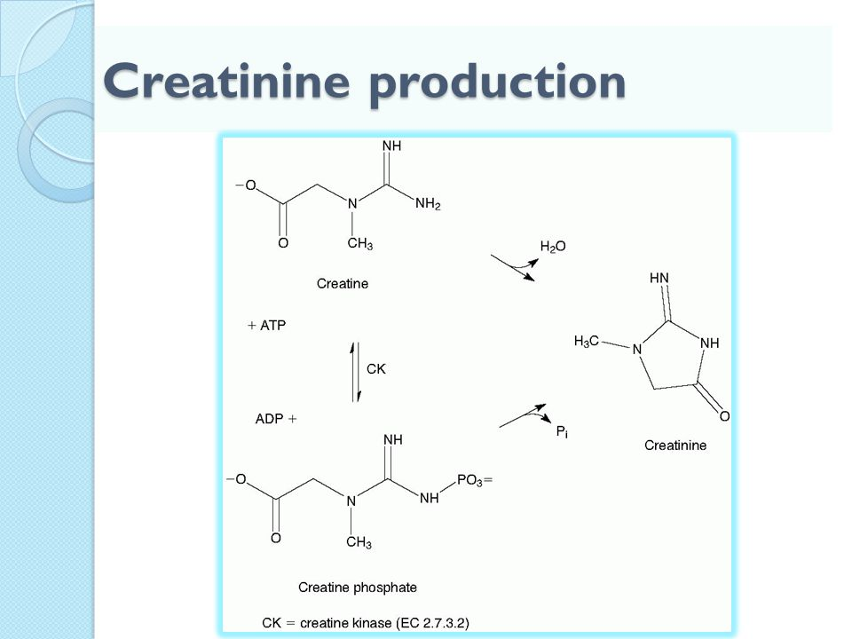 Creatinine production