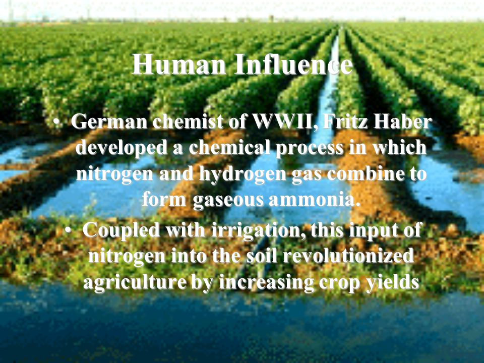 Human Influence German chemist of WWII, Fritz Haber developed a chemical process in which nitrogen and hydrogen gas combine to form gaseous ammonia.