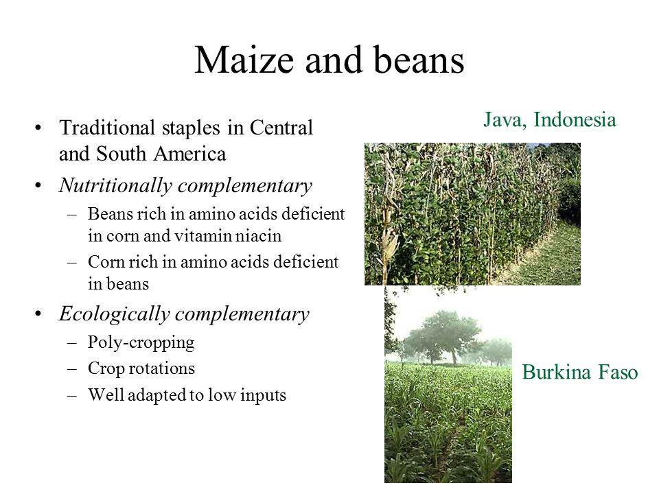 Maize and beans Java, Indonesia