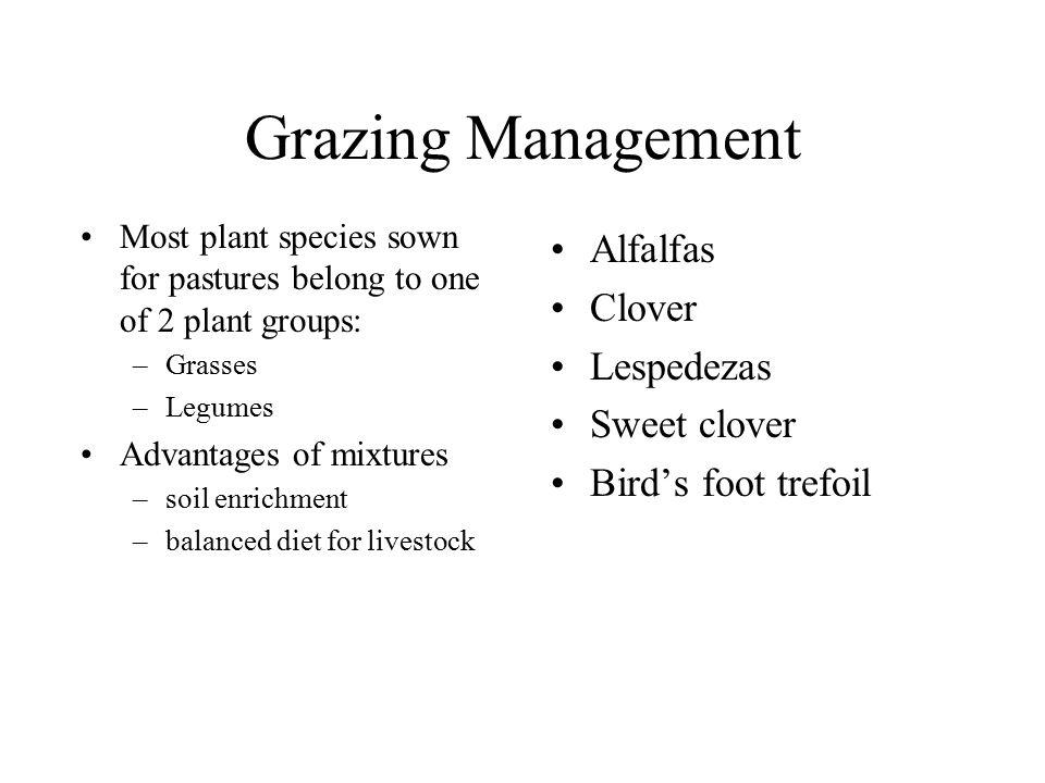 Grazing Management Alfalfas Clover Lespedezas Sweet clover