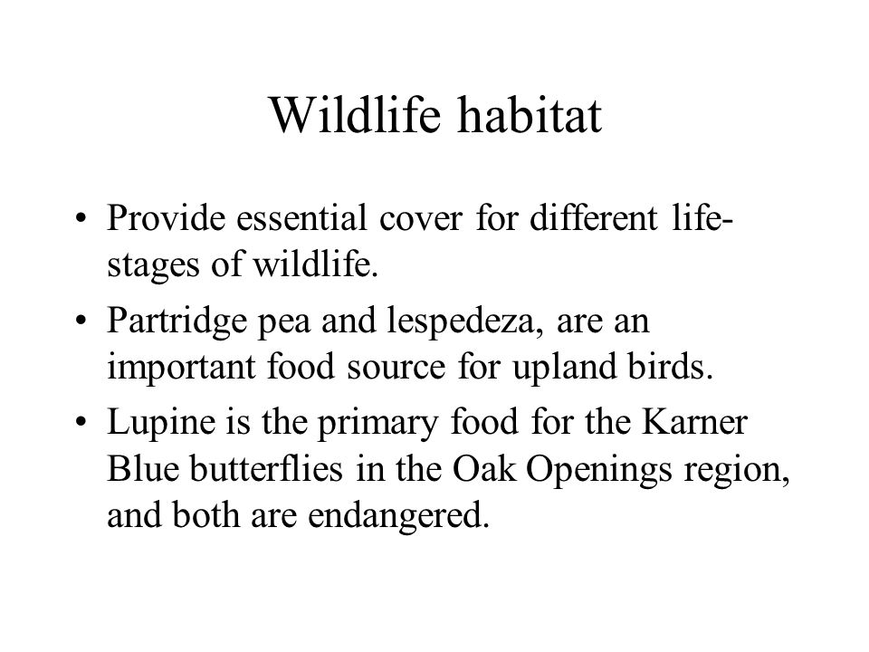 Wildlife habitat Provide essential cover for different life- stages of wildlife.