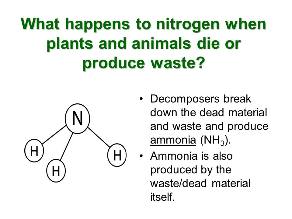 What happens to nitrogen when plants and animals die or produce waste