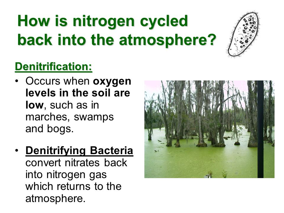How is nitrogen cycled back into the atmosphere