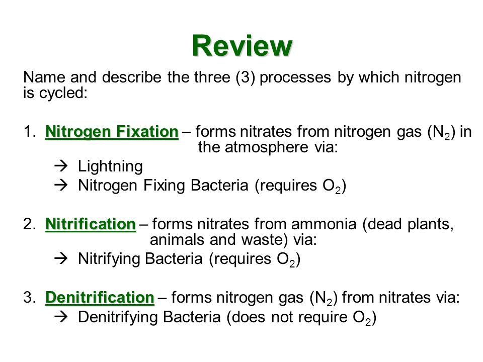 Review Name and describe the three (3) processes by which nitrogen is cycled: