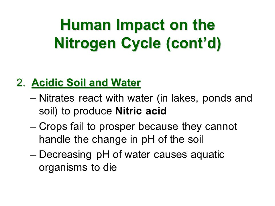 Human Impact on the Nitrogen Cycle (cont'd)