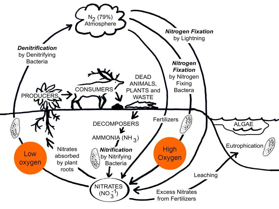 The Nitrogen Cycle High Oxygen Low oxygen