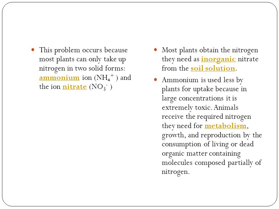This problem occurs because most plants can only take up nitrogen in two solid forms: ammonium ion (NH4+ ) and the ion nitrate (NO3- )