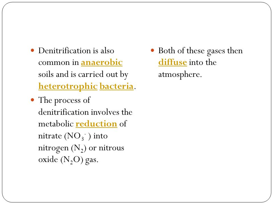 Denitrification is also common in anaerobic soils and is carried out by heterotrophic bacteria.