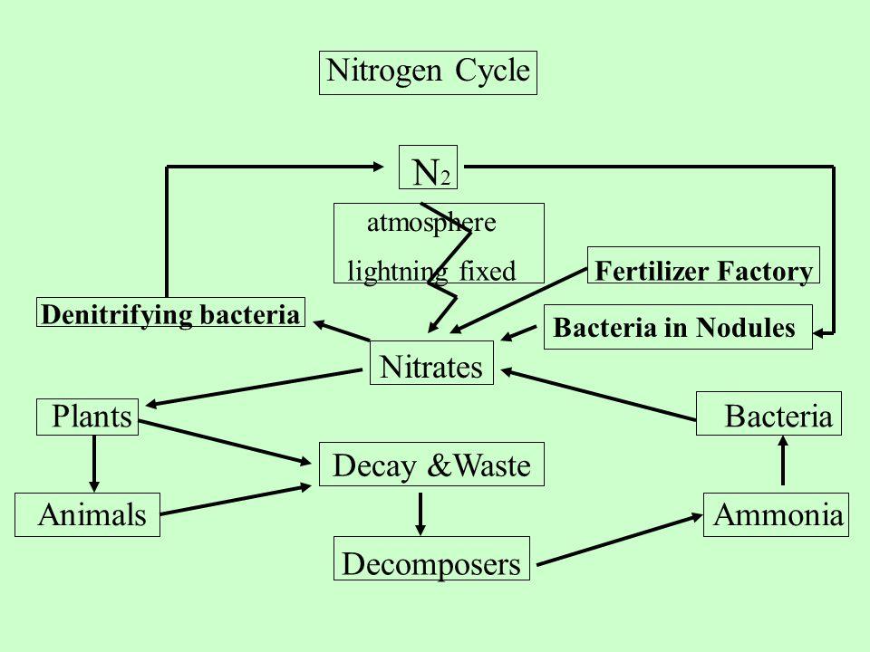 Denitrifying bacteria