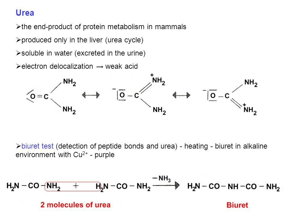 Urea the end-product of protein metabolism in mammals