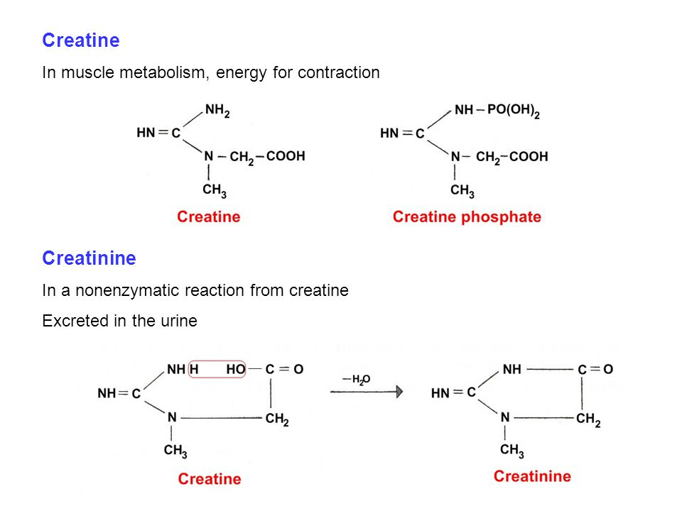 Creatine Creatinine In muscle metabolism, energy for contraction