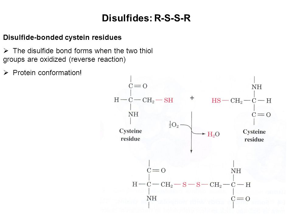 Disulfides: R-S-S-R Disulfide-bonded cystein residues