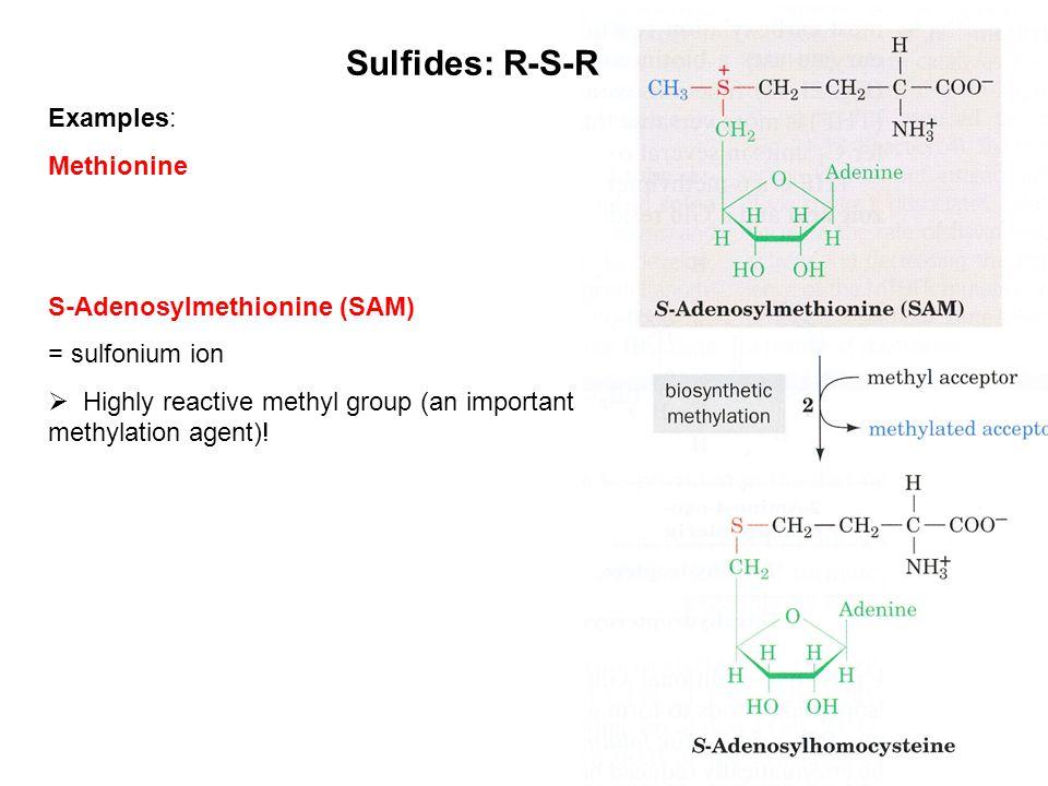 Sulfides: R-S-R Examples: Methionine S-Adenosylmethionine (SAM)