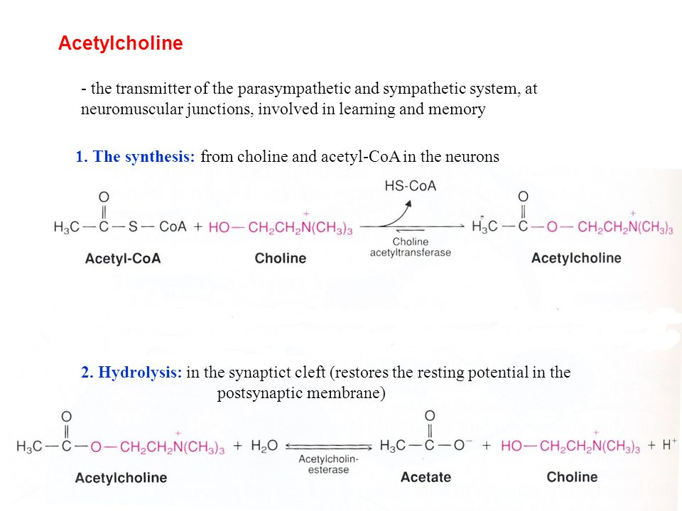 Acetylcholine - the transmitter of the parasympathetic and sympathetic system, at neuromuscular junctions, involved in learning and memory.