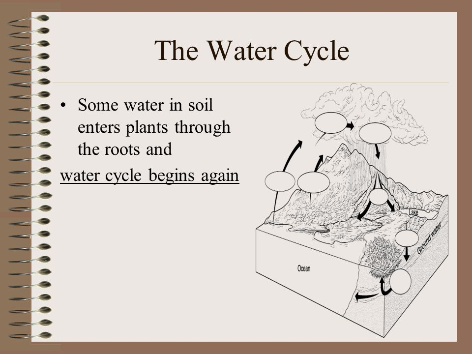 The Water Cycle Some water in soil enters plants through the roots and