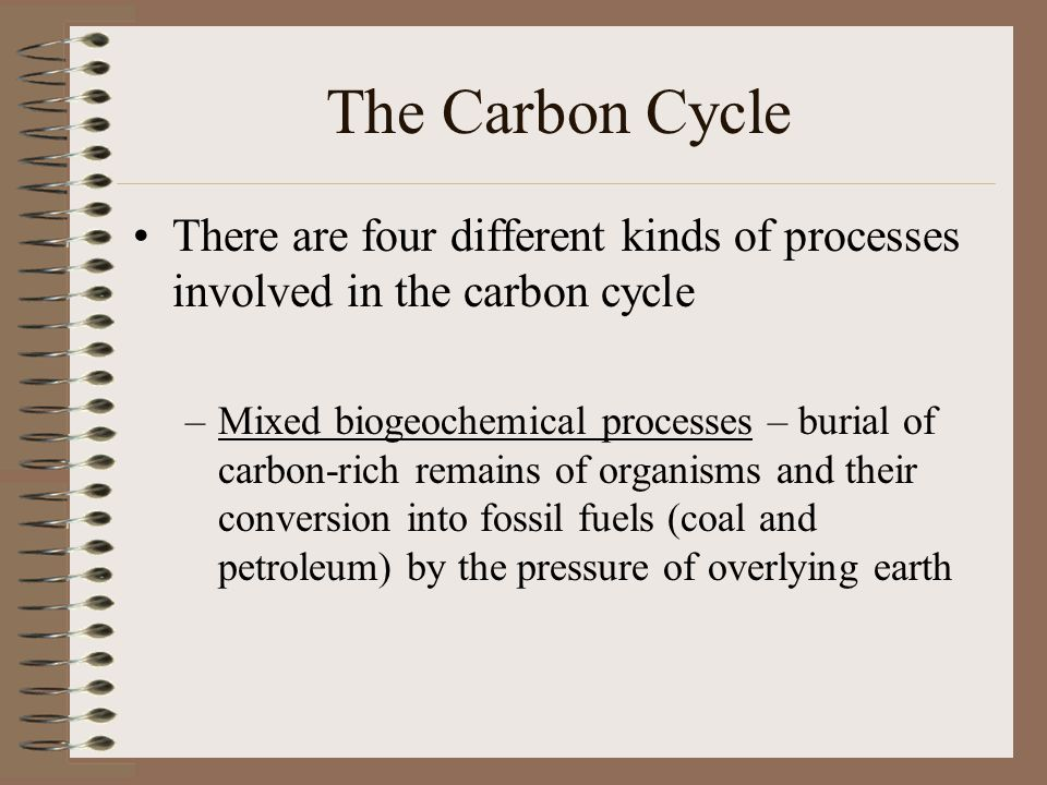 The Carbon Cycle There are four different kinds of processes involved in the carbon cycle.