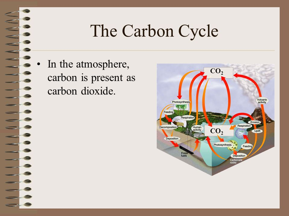 The Carbon Cycle In the atmosphere, carbon is present as carbon dioxide. CO2 CO2