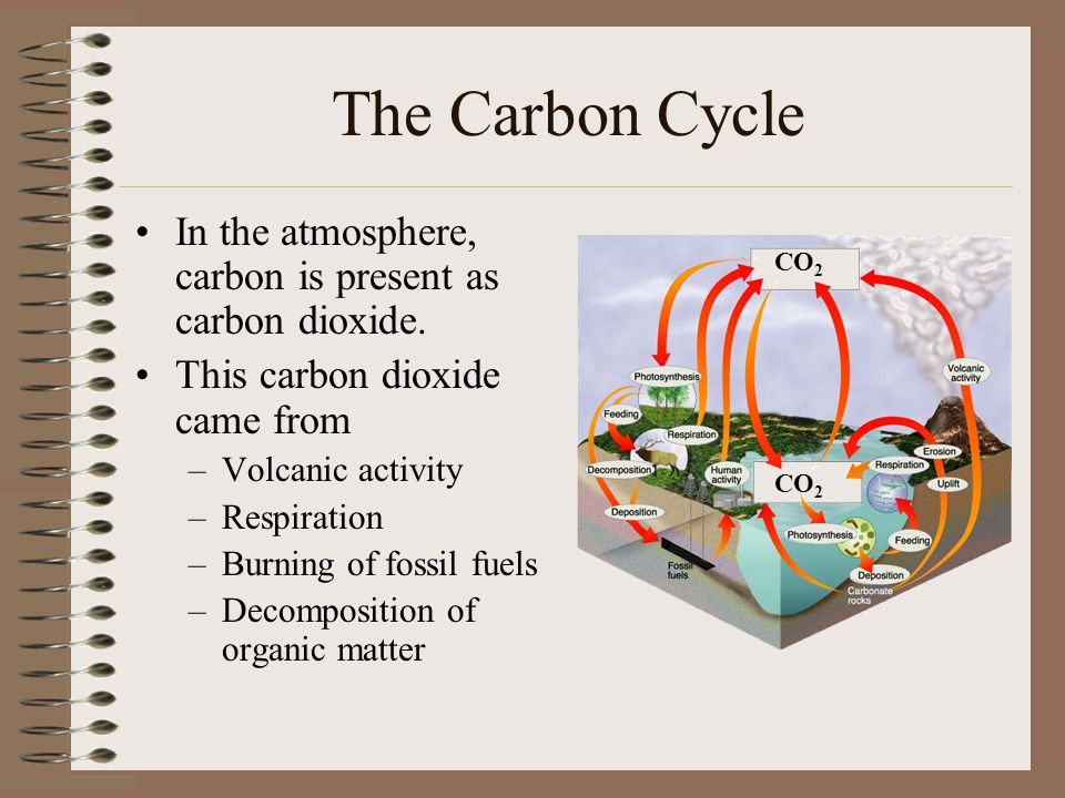 The Carbon Cycle In the atmosphere, carbon is present as carbon dioxide. This carbon dioxide came from.