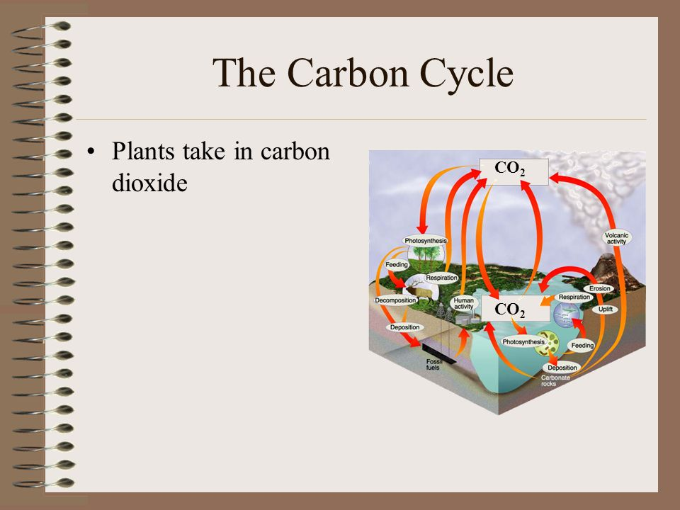 The Carbon Cycle Plants take in carbon dioxide CO2 CO2