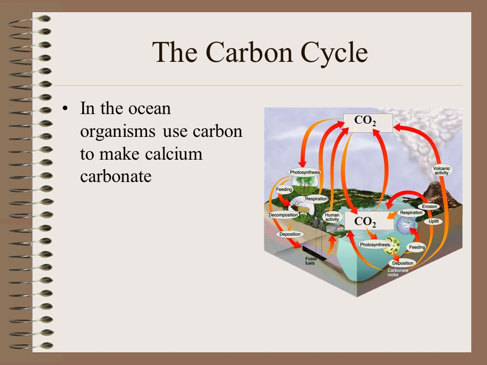 The Carbon Cycle In the ocean organisms use carbon to make calcium carbonate CO2 CO2