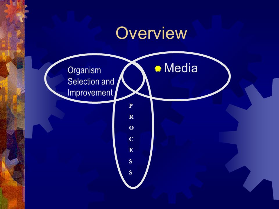 Overview Media Organism Selection and Improvement P R O C E S