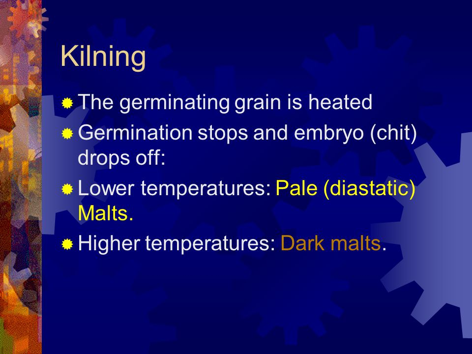 Kilning The germinating grain is heated