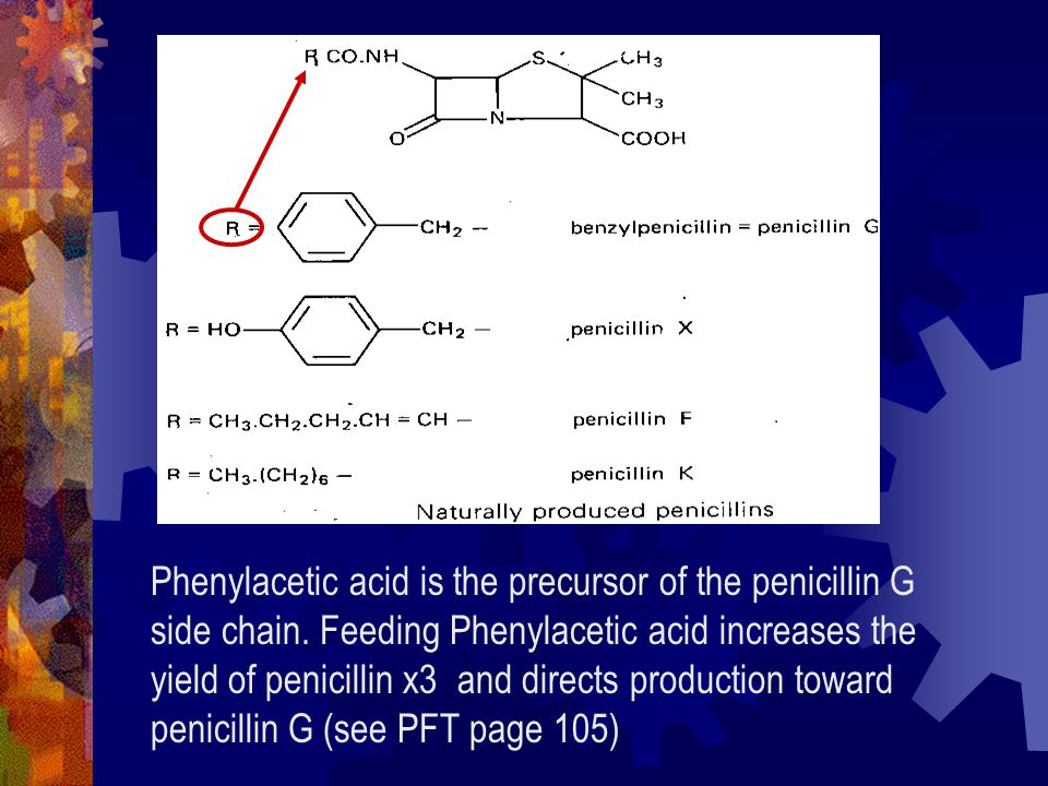 Phenylacetic acid is the precursor of the penicillin G side chain