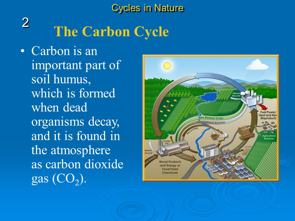 Cycles in Nature 2. The Carbon Cycle.