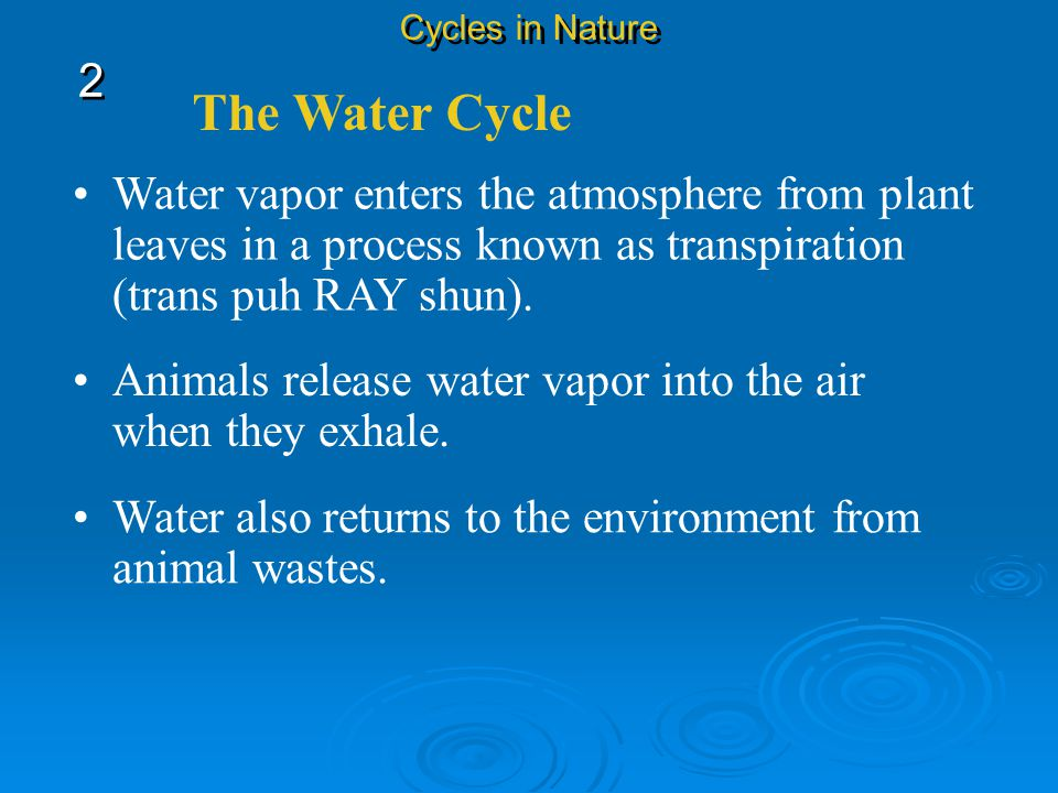 Cycles in Nature 2. The Water Cycle. Water vapor enters the atmosphere from plant leaves in a process known as transpiration (trans puh RAY shun).