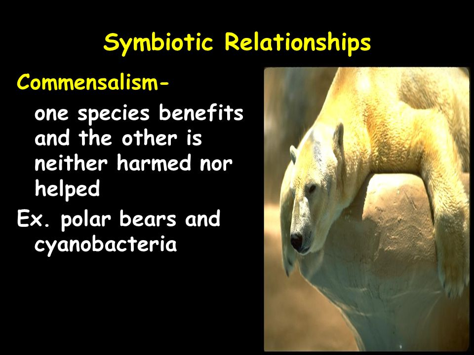 tapeworm and animal symbiotic relationship