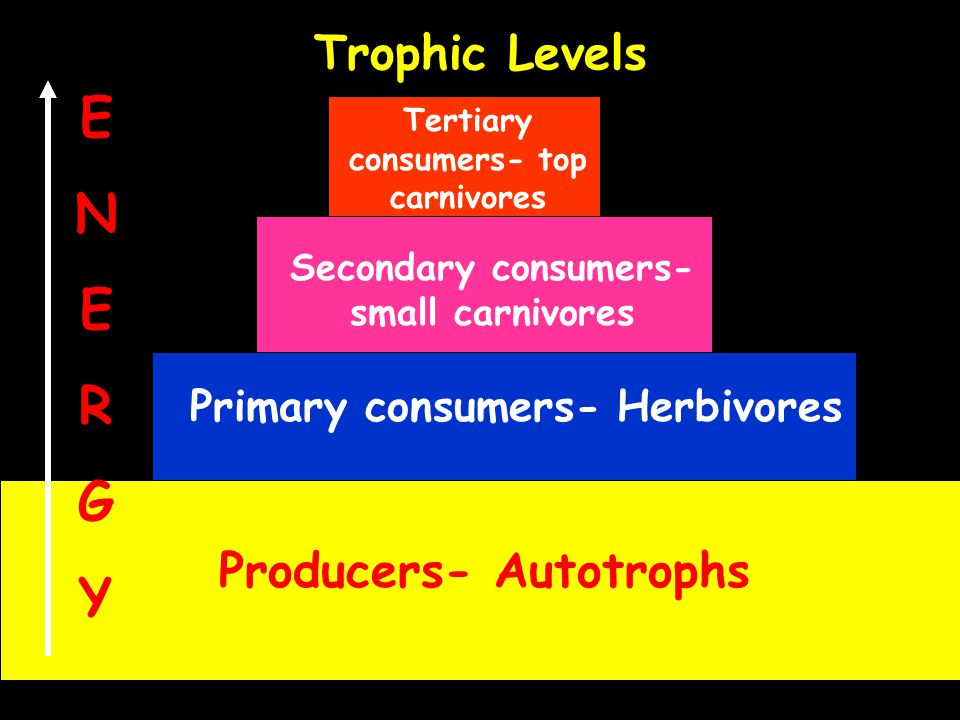 E N R G Y Trophic Levels Producers- Autotrophs