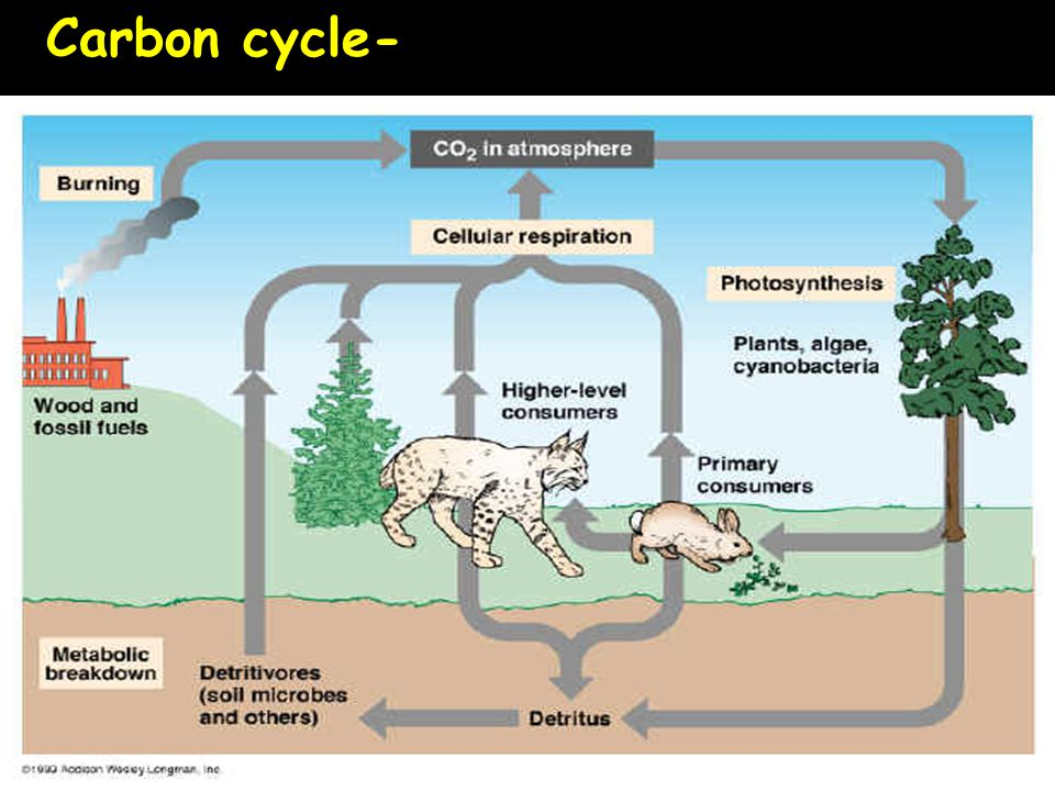 Carbon cycle-