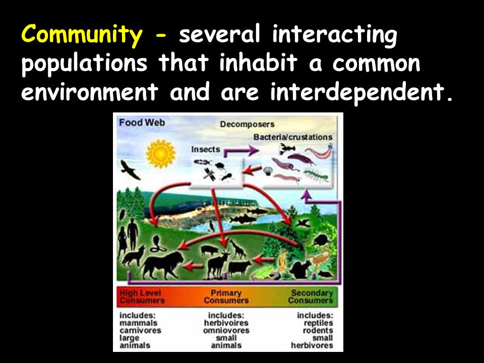 Community - several interacting populations that inhabit a common environment and are interdependent.