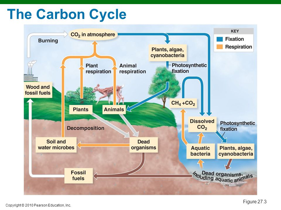 The Carbon Cycle Figure 27.3