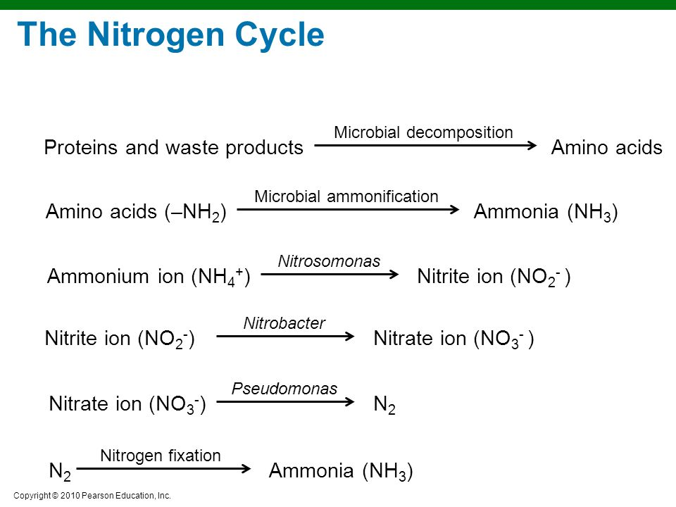 The Nitrogen Cycle Proteins and waste products Amino acids