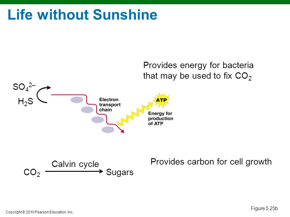 Life without Sunshine Provides energy for bacteria that may be used to fix CO2. H2S. SO42– Provides carbon for cell growth.