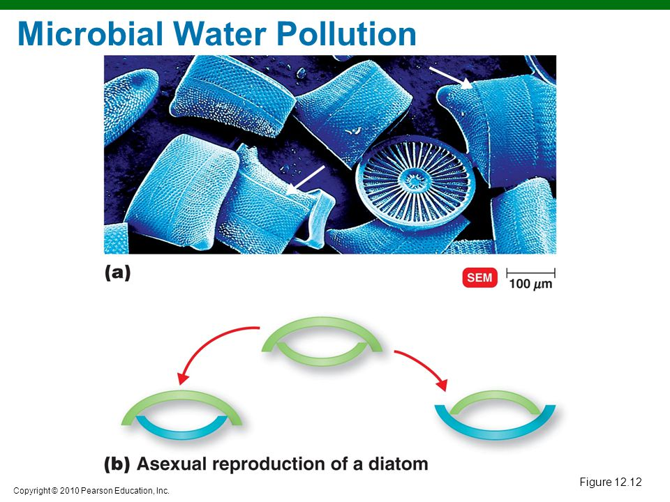 Microbial Water Pollution