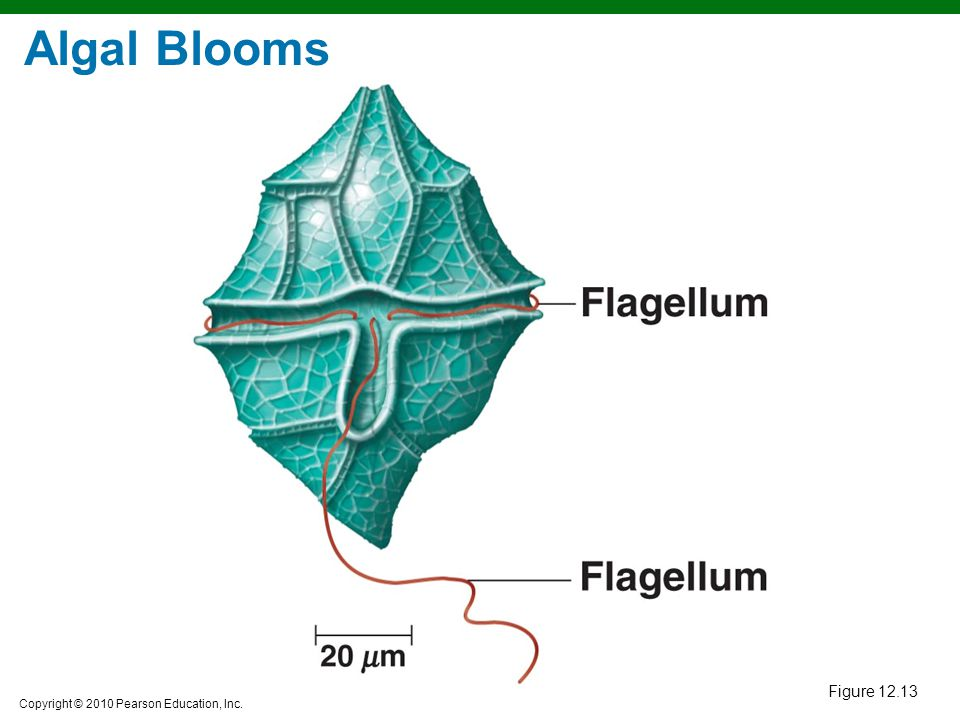 Algal Blooms Figure 12.13