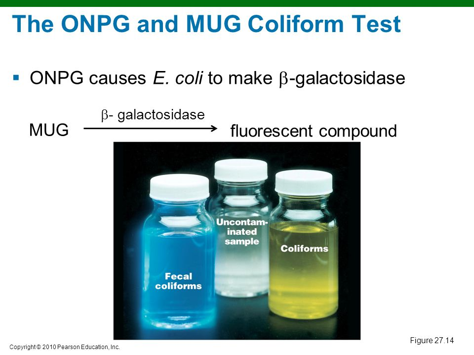 The ONPG and MUG Coliform Test