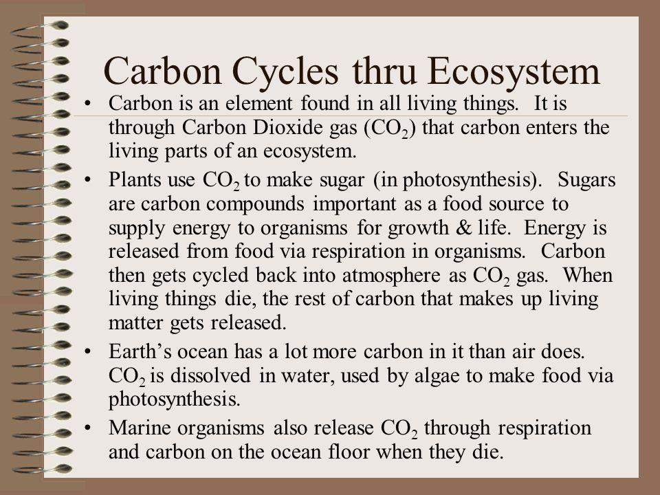 Carbon Cycles thru Ecosystem