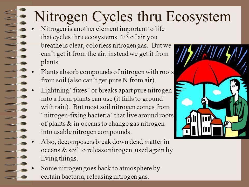 Nitrogen Cycles thru Ecosystem