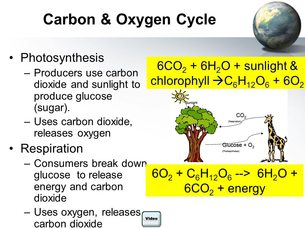 Carbon & Oxygen Cycle Photosynthesis