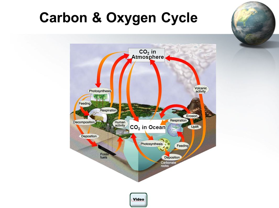 Carbon & Oxygen Cycle Figure 3-13 The Carbon Cycle Section 3-3 CO2 in