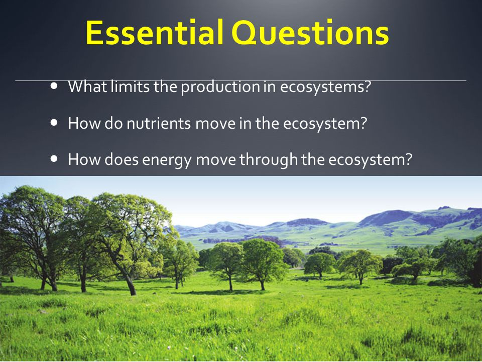 Essential Questions What limits the production in ecosystems