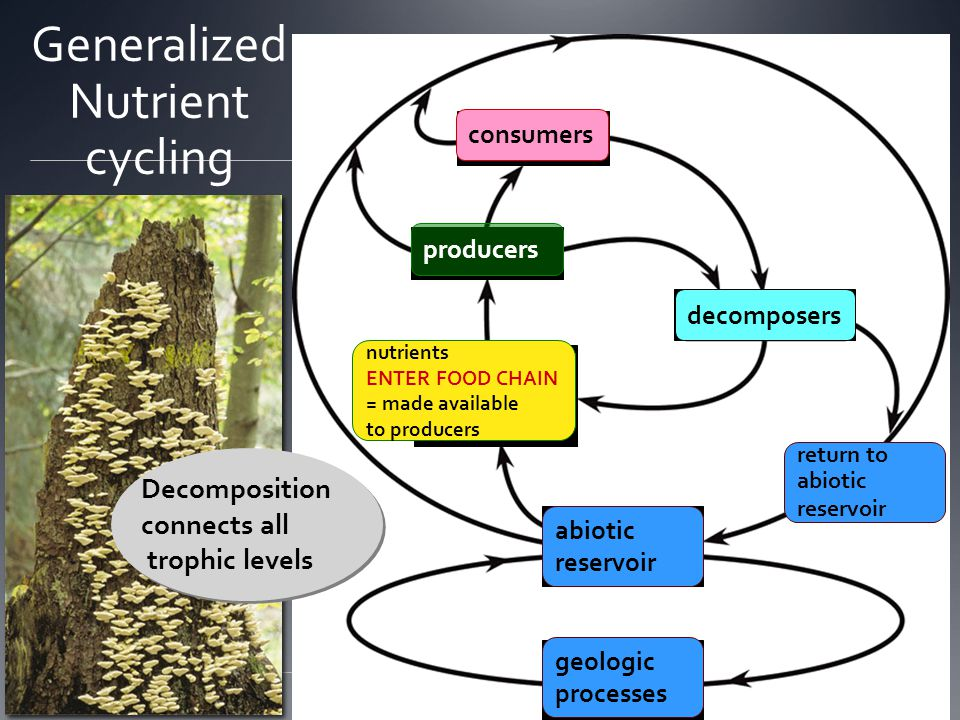 Generalized Nutrient cycling