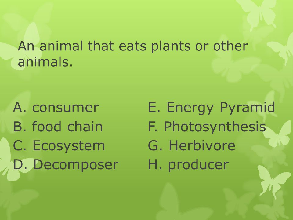 An animal that eats plants or other animals.