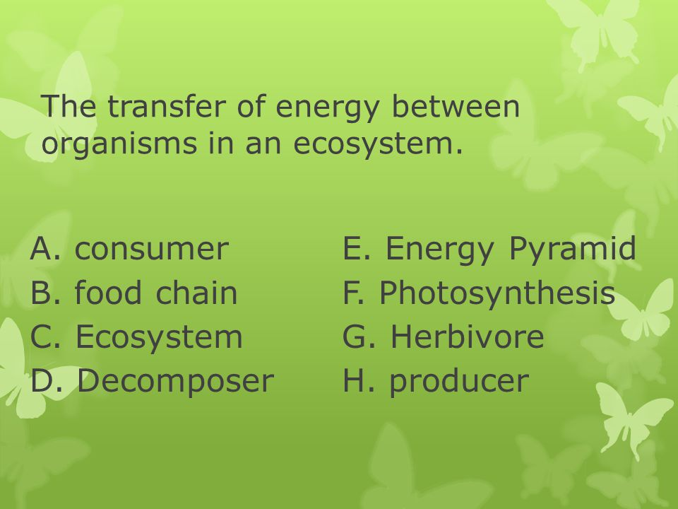 The transfer of energy between organisms in an ecosystem.