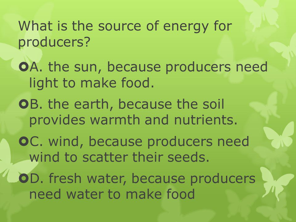 What is the source of energy for producers