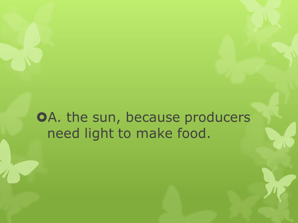 A. the sun, because producers need light to make food.